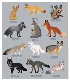 Cute Fox Drawing, Cute Drawings, Animal Drawings, Fox Breeds, Fox Species, Swift Fox, Animal Tails, Fox Pictures, Grey Fox