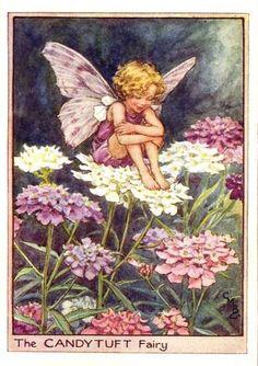 Candytuft+Flower+Fairy+Print+c.1950+Fairies+by+Cicely+Mary+Barker