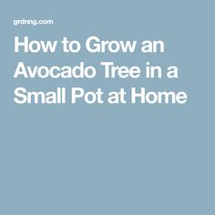 How to Grow an Avocado Tree in a Small Pot at Home