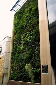 growing a green wall   gardenopolis