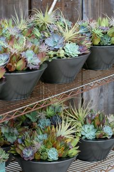 Flora Grubb bowls. Succulents and Tillandsias. Very compatible.