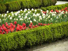 Tulipanes en Madrid