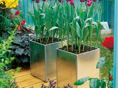 Add Style To Small Backyards And Outdoor Spaces With A Container Garden Or  Stunning Pot.