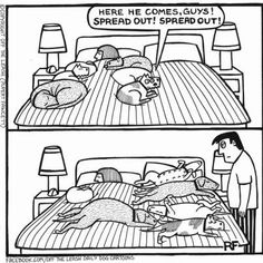 """Our house! (Love these cartoons - """"Off the Leash"""" by Rupert Fawcett.) - Tap the pin for the most adorable pawtastic fur baby apparel! You'll love the dog clothes and cat clothes! <3"""