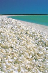 Formed from billions of tiny shells, aptly named Shell Beach in the Shark Bay World Heritage Area is popular for swimming, beach combing and relaxing in the sunshine. Shell Beach is one of only a handful of places on earth where shells replace beach . Perth Australia, Western Australia, Australia Travel, Visit Australia, Shell Beach, Places Around The World, Around The Worlds, Algarve, Natural Wonders