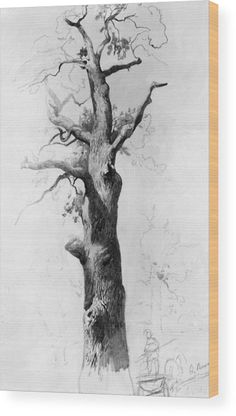 59 Ideas Tree Trunk Drawing Pencil For 2019 Tree Trunk Drawing, Tree Drawings Pencil, Branch Drawing, Tree Sketches, Drawing Sketches, Sketching, Academic Drawing, Russian Painting, Nature Sketch
