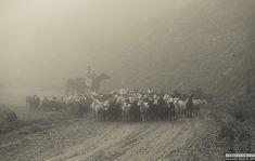 HORSES OF MOUNTAINS Equine photohraphy by Ekaterina Druz