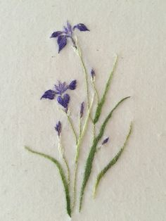 Blue Japanese iris