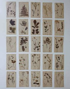 Botanical wall installation