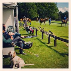 Dogs and horses at Guards Polo Club near Coworth Park hotel.