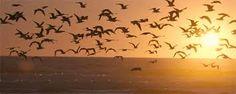 aves voando tumblr - Pesquisa Google