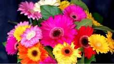 Types of Flowers – Flowers are beautiful, come in a massive array of shapes, sizes, and colors. Different types of flowers are used for many reasons in almost all cultures. Flowers differenti…