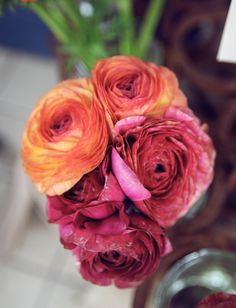 The 9 Basic Rules of Peony Care - Home & Garden Love Flowers, Wedding Flowers, Peony Care, Bathroom Colors, Bathroom Ideas, Growing Peonies, Bloom Where Youre Planted, Fantasy Wedding, House Colors