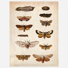Science Moth Print   I would really like some pictures like this