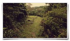 My photographs of Bukit Brown Cemetery, Singapore — featured in FiveFootWay magazine