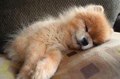 I'm Tired, Let Me Sleep