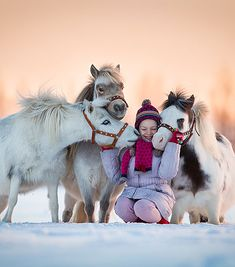 Miniature horses with a kid in the snow.