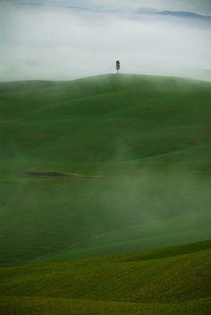 Tuscany - Cypress fog