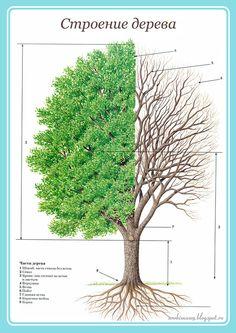тематическая неделя деревья Forest School, Fauna, Science For Kids, Planting Flowers, Garden Tools, Dandelion, Photo And Video, Plants, Image