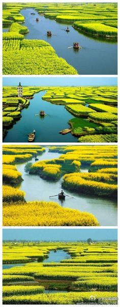 Xinghua City ( Chinese: 興化 ), Jiangsu, China -- 江蘇 興化 油菜花垛田.