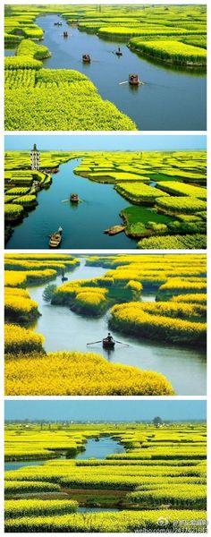 Xinghua City ( Chinese: 興化 ), Jiangsu, China -- 江蘇 興化 油菜花垛田.