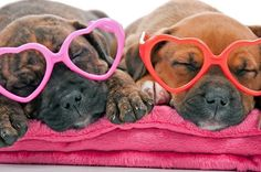 Last minute Valentine's gift ideas with cute puppy pictures!