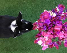 Bunny stops to smell the flowers - November 2, 2016