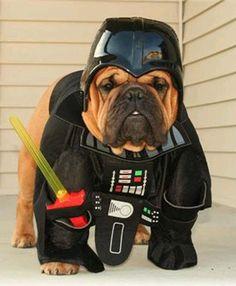 Star Wars x Bulldogs = Bull Wars BaggyBulldogs