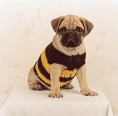 Pugglebee! What an adorable little #knit sweater!