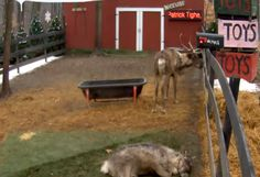 You and Your Students Will Love Santa's Official Reindeer Live Feed Camera! #Christmas #Free #TeachersFollowTeachers
