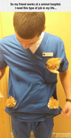 My friend works at an animal hospital...I need this job