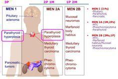 496 Best medicine images in 2019 | Medical anatomy, School