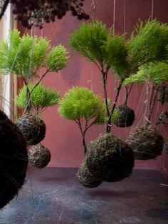 Charming Hanging Plants ideas to Brighten Your Patio – Gardening Decor Indoor Garden, Garden Art, Garden Plants, Indoor Plants, House Plants, Garden Design, String Garden, Moss Plant, Diy Plant Stand