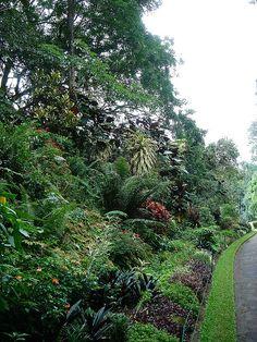 Peradeniya Botanical Gardens - Kandy, Sri Lanka