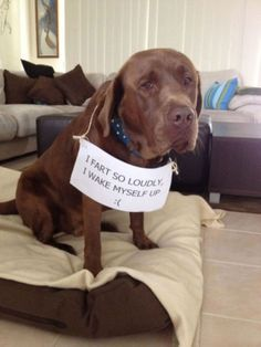 Funny Animal Pictures Lmao Could You Imagine This Happening - 26 funny photos of guilty dogs