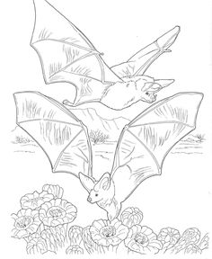 Bat Coloring Pages Picture Id 1356816105