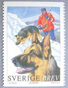 Sverige / Sweden German Shepherd / Schäfer