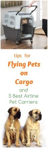 5 Best Pet Carriers And Tips For Safer Airline Cargo Flights...see more at PetsLady.com -The FUN site for Animal Lovers
