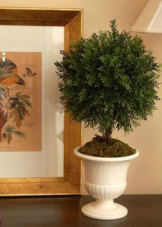 DIY Topiary  : DIY Boxwood Topiary