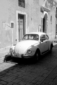 Coccinelle / Beetle - Mexico - 2010