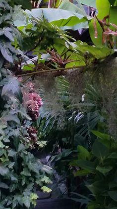 Jungle in onze tuin