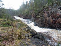 Kuusamo, Oulanka. Könkään Keino, 8 km:n vaellusreitti. Kiutaköngäs ja kosken kuohut.