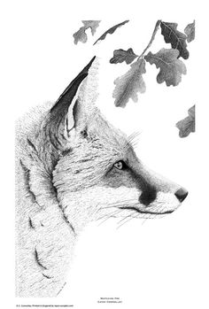 Pen and Ink print of watching red fox - highly detailed drawing.