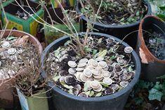 Použité čajové vrecúška nevyhadzujte! Takto ich môžete využiť v záhrade   Urob si sám Succulents, Plants, Succulent Plants, Plant, Planets