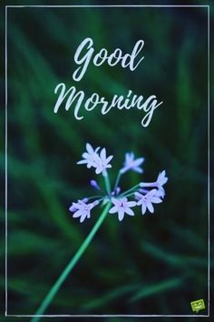 Fresh Inspirational Good Morning Quotes for the Day - Part 4