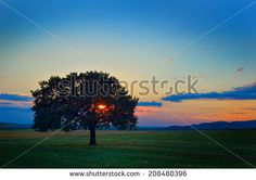 Tree in direct light at sunset - stock photo