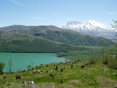 Mt. St. Helens.....great place to hike.  Can't wait to return.....so very humbling!!!!