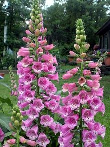 Perennial flowers!