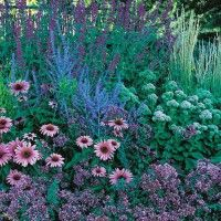When the rest of your garden is taking a late summer snooze, the August Afternoons perennial garden will wake you up with its engaging display of pinks and blues. By combining a pleasing mixture of grasses, flower forms and colors, this hummingbird and bu