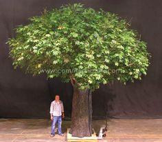 SUGAR MAPLE COLUMN TREE